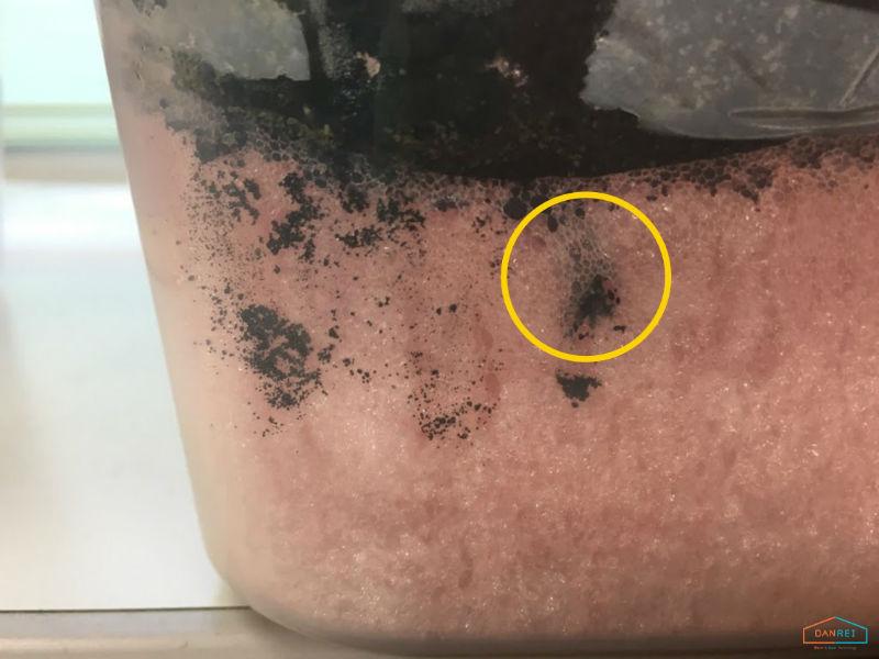 発泡ウレタンを穿孔しているシロアリ